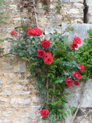 La Roseraie gardens